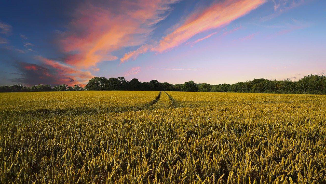Usaha Bidang Pertanian